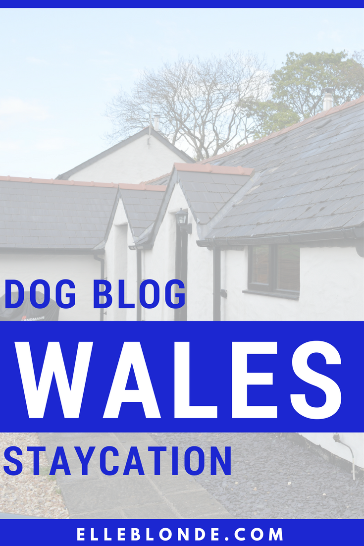 Dog Blog | Staycations for you and your dog in the UK | Pembrokeshire Wales | Elle Blonde Luxury Lifestyle Destination Blog
