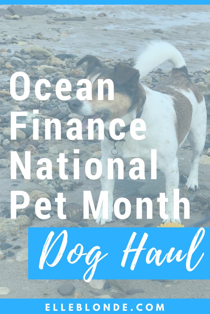 Dog Blog | National Pet Month | Dog Haul with Ocean Finance | Elle Blonde Luxury Lifestyle Destination Blog