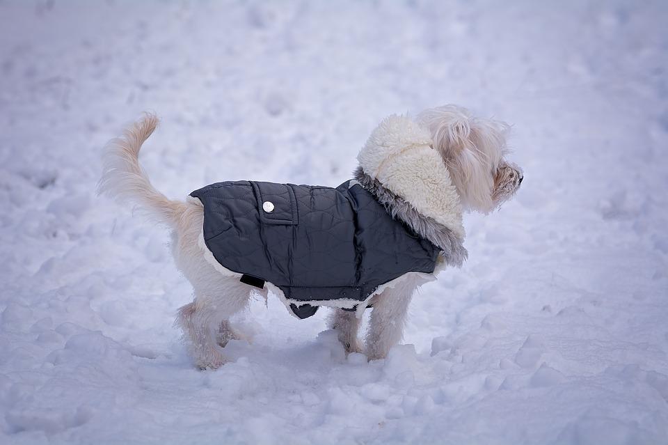 Top Tips For Dressing Your Dog In Cute Dog Clothes | Black Pug In Blue Jumper | Dog Blog | Elle Blonde Luxury Lifestyle Destination Blog