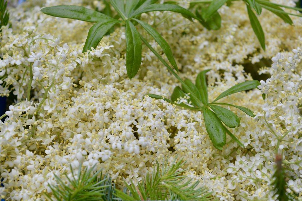 fresh-elderflower-the-botanist-newcastle-summer-cocktail-menu-launch-opr-elle-blonde-luxury-lifestyle-blog