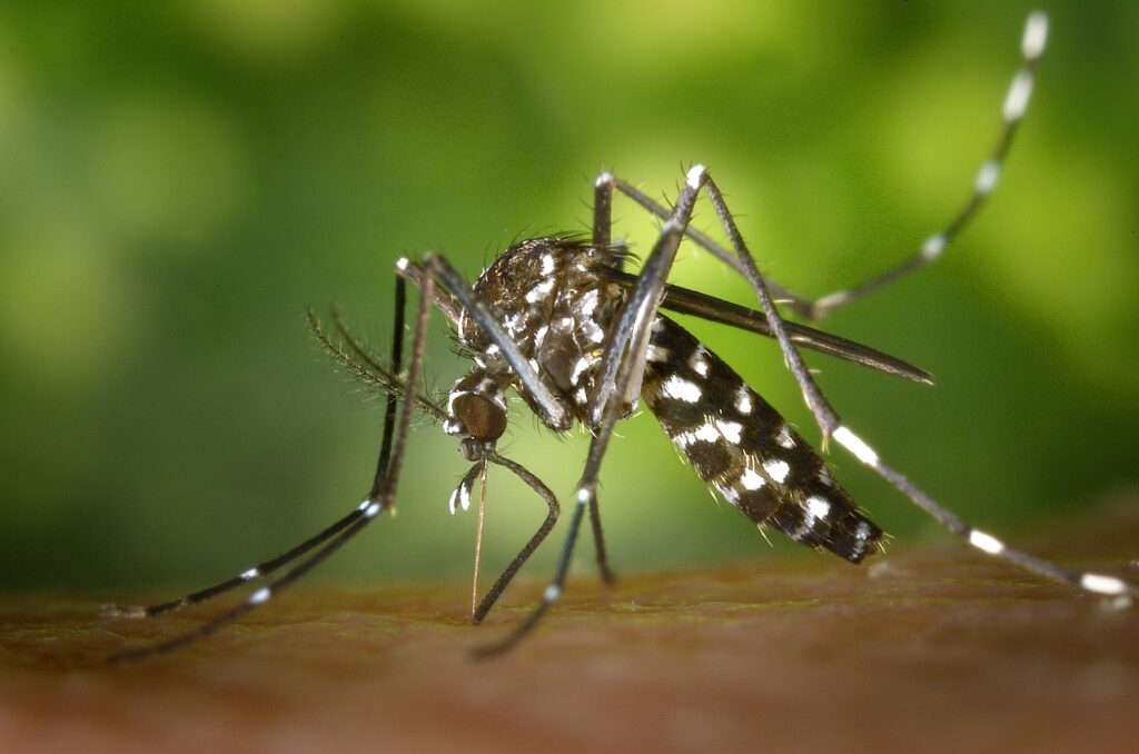 Have Mosquito Bites And Fear Dengue Fever? Here Are 7 Ways To Avoid It 2