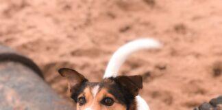 Petplan Pethood Stories - Pet Census 2018 discovering the UK's pet habits   Dog Blog   Elle Blonde Luxury Lifestyle Destination Blog
