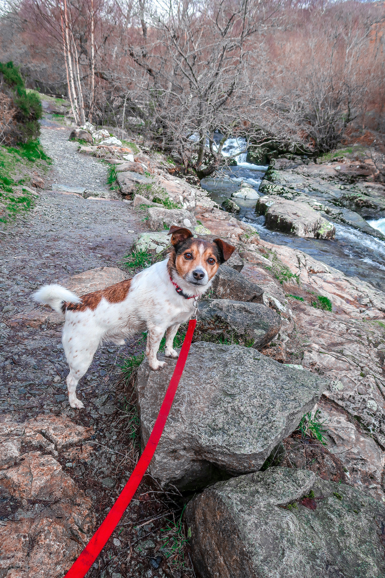 Aira Force in the Lake District | Places to visit and good walks | Waterfall | Travel Guide | Elle Blonde Luxury Lifestyle Destination Blog