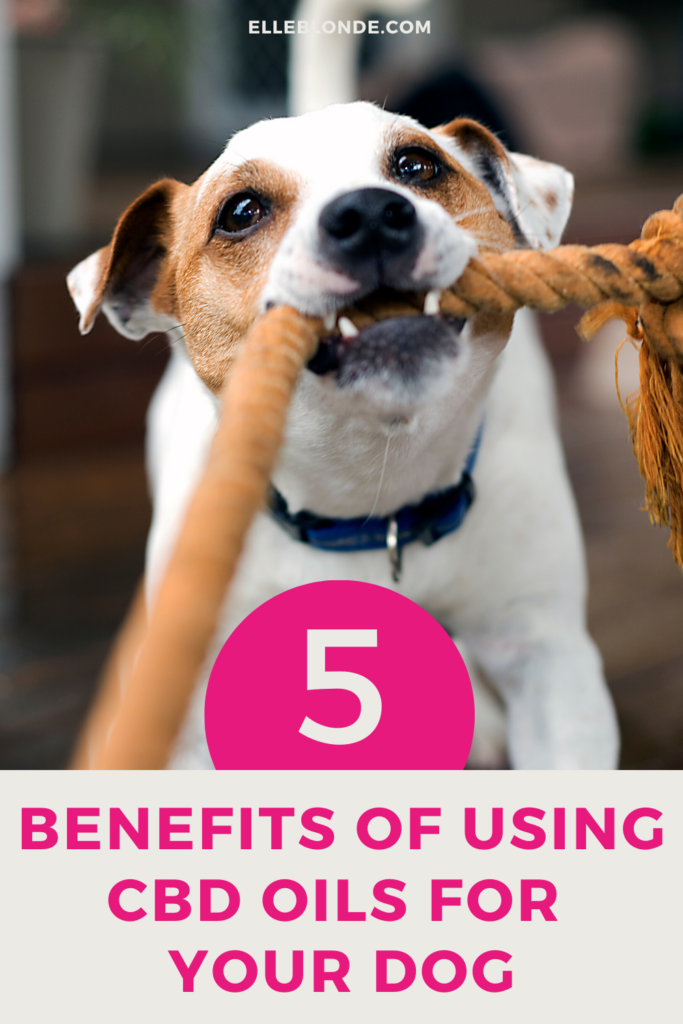 CBD oils for dogs and the benefits of using CBD for dog's health issues | Dog Blog | Elle Blonde Luxury Lifestyle Destination Blog