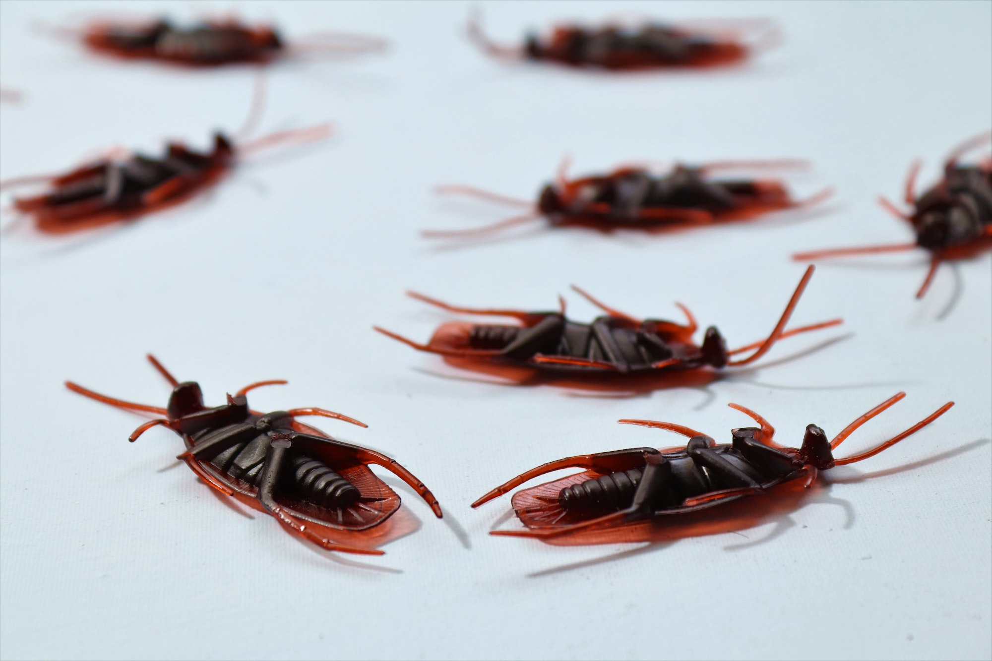 4 Steps To Finding Pest Control Services In Adelaide South Australia 3