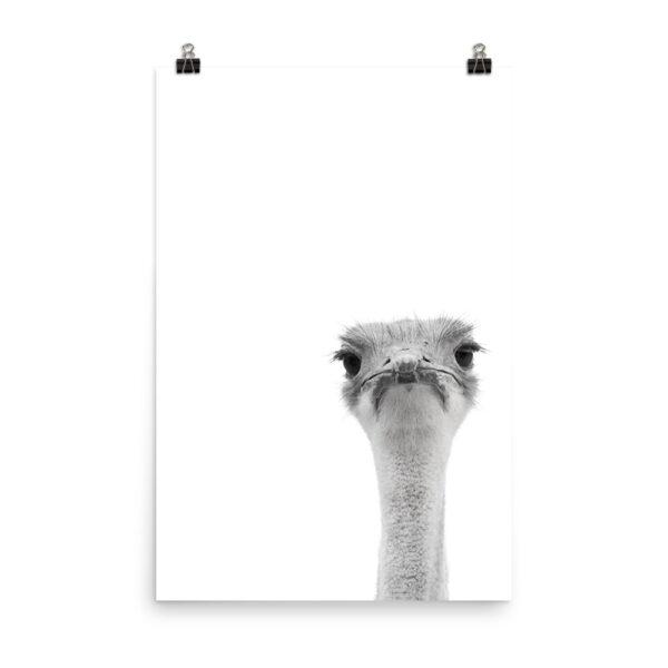 Watcha Lookin' At II - Monochrome Ostrich Print   Home Interiors   Elle Blonde Luxury Lifestyle Destination Blog
