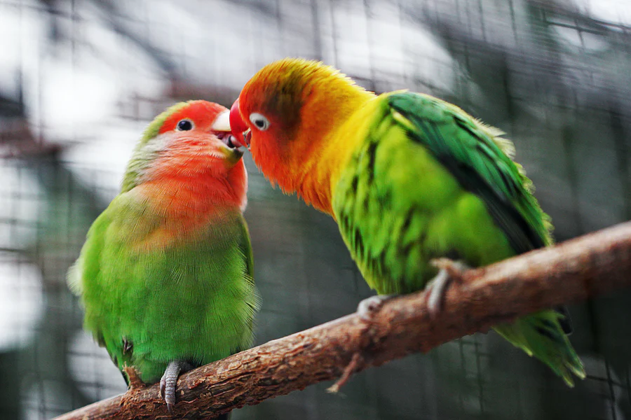 Here Are 4 Reasons Why Pet Birds Are Amazing | Animals | Elle Blonde Luxury Lifestyle Destination Blog