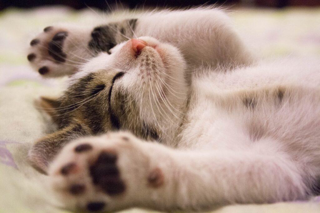 Top 5 Signs That Show Your Kitten is Unhealthy   Animals   Elle Blonde Luxury Lifestyle Destination Blog